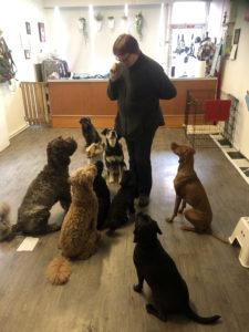 dog walker vancouver, dog walking vancouver, vancouver dog walker, vancouver dog training, dog trianing vancouver, dog daycare vancouver, vancouver dog daycare