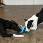 two dogs playing tug with a toy at daycare